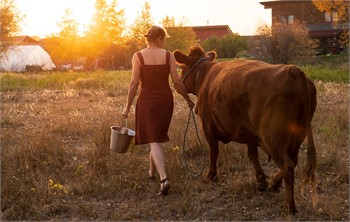 Buying a Dexter Family Milk Cow